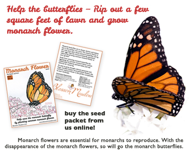 save the monarchs . . .  plant common monarch flower seeds!