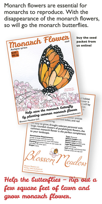 buy common monarch flower to save the butterflies